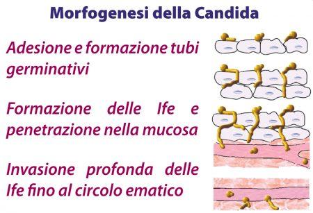 Micotirosolo_Morfogenesi_Candida